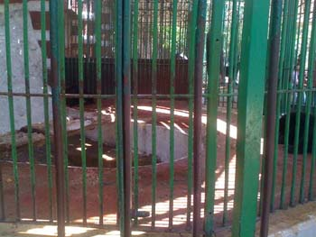 despite donating chilling water system for bears enclosure and split units in 2008, Giza Zoo failed to maintain the system, as seen, tub without water, no chilling , nothing in high summer temperature over 40 degrees - photo by:  Dina Zulfikar