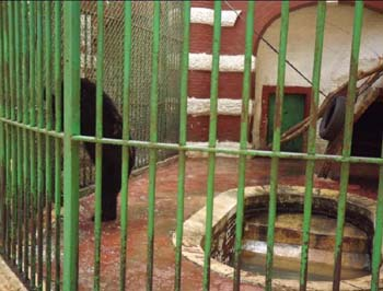 Bears enclosure - Giza Zoo - 30 June 2012 - picture property:  Hatem Moushir
