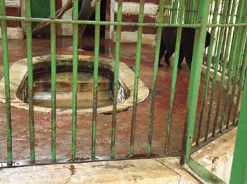 bears enclosure at Giza Zoo, no water in the basin, they say, our bears don't like going into the water!!! 30 June 2012 - picture property:  Hatem Moushir
