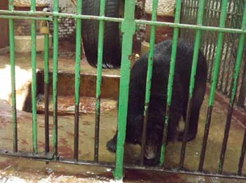 bears enclosure at Giza Zoo!!30 June 2012 - picture property:  Hatem Moushir