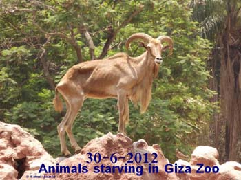 30 June 2012 - Giza Zoo - Picture property:  Hatem Moushir