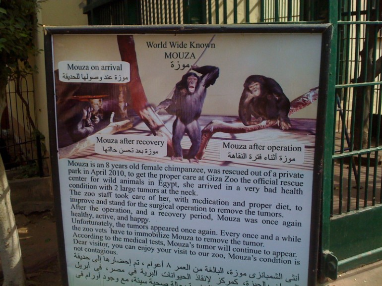 sign on Mouza's enclosure explaining her condition