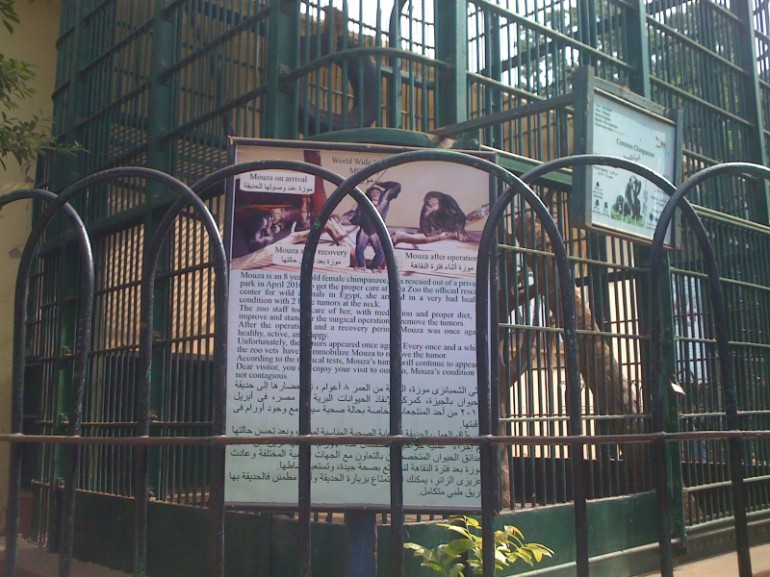 in follow up as of 6 Nov. 2011, a sign explaining Mouza's condition to the public